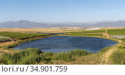 Riebeek Kasteel, Swartland, South Africa. 2019. Overview of the vineyards... Стоковое фото, фотограф UNIVERSAL IMAGES GROUP / age Fotostock / Фотобанк Лори