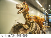 Dinosaurier Modell, Naturhistorischen Museum Wien, Österreich, iEuropa... Стоковое фото, фотограф Peter Schickert / age Fotostock / Фотобанк Лори