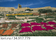 Fez, Morocco, Tanned animal skins are lying outside on a meadow to dry (2010 год). Редакционное фото, агентство Caro Photoagency / Фотобанк Лори