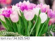 A Festive Bouquet of fresh Flowers of Pink White lilac Spring Tulips for the Women's Holiday on March 8, Mother's day, Easter, Wedding, to the congratulation invitation Birthday. Стоковое фото, фотограф Светлана Евграфова / Фотобанк Лори