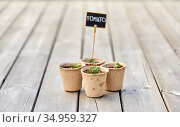 tomato seedlings in pots with name tags. Стоковое фото, фотограф Syda Productions / Фотобанк Лори