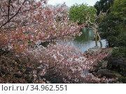 Shinjuku Gyoen National Garden, Tokyo, Japan. Стоковое фото, фотограф Alexandra Buxbaum / age Fotostock / Фотобанк Лори