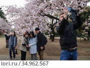 Shinjuku Gyoen National Garden, Tokyo, Japan. (2019 год). Редакционное фото, фотограф Alexandra Buxbaum / age Fotostock / Фотобанк Лори