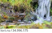 Mountain creek in a green forest in summer. Стоковое видео, видеограф FotograFF / Фотобанк Лори