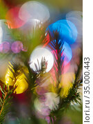 Silhouette of fir branch with needles Christmas tree. Happy New Year ornament decorations, colorful defocused blurry bokeh background. Стоковое фото, фотограф А. А. Пирагис / Фотобанк Лори