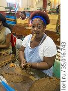 Cuban woman in in a cigar factory in Havana. Cuba. (2016 год). Редакционное фото, фотограф Andre Maslennikov / age Fotostock / Фотобанк Лори