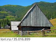 In the Chocholowska Clearing. Стоковое фото, фотограф Ignacy Wojciech Pilch / age Fotostock / Фотобанк Лори
