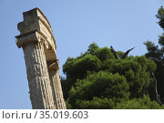 Ruins of Ancient Olympia, Olympia, Peloponnese, Greece, Europe. Стоковое фото, фотограф Alberto Carrera Anaya / easy Fotostock / Фотобанк Лори