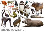 south america animals isolated. Стоковое фото, фотограф Яков Филимонов / Фотобанк Лори