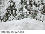 Сугроб и деревья после снегопада. Стоковое фото, фотограф Ольга Зиновская / Фотобанк Лори