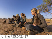 Africa, Namibia, Private reserve, Chacma or chacma baboon (Papio ... Стоковое фото, фотограф Morales / age Fotostock / Фотобанк Лори