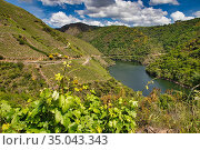 Vineyards, Ribeira Sacra, Heroic Viticulture, Sil river canyon, Sober... Стоковое фото, фотограф Javier Larrea / age Fotostock / Фотобанк Лори
