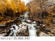 Autumn view of the Bolshoy Ilgumen river at its confluence with river the Katun. Altai Republic, Russia. Стоковое фото, фотограф Наталья Волкова / Фотобанк Лори
