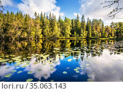 Озеро с отражениями леса и облаков на острове Анзер (Соловки) Стоковое фото, фотограф Baturina Yuliya / Фотобанк Лори