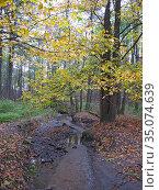 Липитинский ручей. Природно-исторический парк «Измайлово» Редакционное фото, фотограф Мария Кылосова / Фотобанк Лори