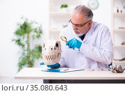 Old senior paleontologist working in the lab. Стоковое фото, фотограф Elnur / Фотобанк Лори