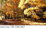 Leaf fall in the autumn park on a sunny day. Стоковое видео, видеограф Наталья Волкова / Фотобанк Лори