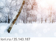 Зимний лес, заснеженные зимние деревья. Winter landscape, soft sunrise light in the winter forest, picturesque winter morning with forest trees and nature. Стоковое фото, фотограф Зезелина Марина / Фотобанк Лори