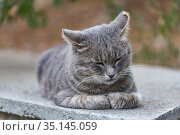 Бездомный кот лежит на улице. Стоковое фото, фотограф Литвяк Игорь / Фотобанк Лори