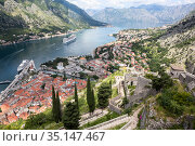 Panoramic view of the Kotor Gulf or Boka Kotorska with medieval town, sea port with ferryboats and surrounding mountains. View from the walls of fort. Montenegro, Europe (2016 год). Стоковое фото, фотограф Кекяляйнен Андрей / Фотобанк Лори