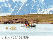 Polar bear (Ursus maritimus) female and cub wading through water, tourists taking photographs from boat in background. Lack of sea ice may be due to climate... Стоковое фото, фотограф Nick Garbutt / Nature Picture Library / Фотобанк Лори