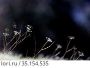 Grasses in spring. France. Стоковое фото, фотограф Pascal Deloche / Godong / age Fotostock / Фотобанк Лори