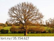 Normandy landscape, France. Стоковое фото, фотограф Philippe Lissac / Godong / age Fotostock / Фотобанк Лори