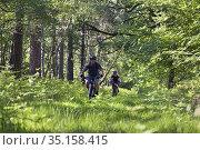 Mountain bikers in the Forest of Rambouillet, Haute Vallee de Chevreuse... Стоковое фото, фотограф Christian Goupi / age Fotostock / Фотобанк Лори