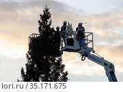 Placing the Christmas Tree in Saint Peter's Square at the Vatican... Стоковое фото, фотограф Antoine Mekary / Godong / age Fotostock / Фотобанк Лори