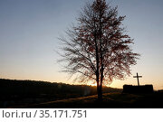 Tree and cross at dusk at Le Bec Hellouin, Eure, France. Стоковое фото, фотограф Philippe Lissac / Godong / age Fotostock / Фотобанк Лори