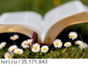 Open Bible in the grass with daisies in the foreground. France. Стоковое фото, фотограф Fred de Noyelle / Godong / age Fotostock / Фотобанк Лори