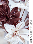 Floral background pattern of chocolate brown earthy and white color with artificial flowers large elegant lilies in pastel tone for postcard. Стоковое фото, фотограф Светлана Евграфова / Фотобанк Лори