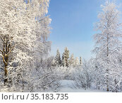 Snow-covered trees in the winter forest. Beautiful winter landscape in the Taganay Nature Reserve in the Urals, Russia. Стоковое фото, фотограф Мария Сибатрова / Фотобанк Лори