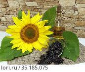 Цветок подсолнуха, подсолнечное масло и семечки. Стоковое фото, фотограф EgleKa / Фотобанк Лори