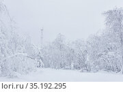 White winter snowy landscape - a road through the forest and an icy cell tower in the distance after a snowfall. Стоковое фото, фотограф Евгений Харитонов / Фотобанк Лори