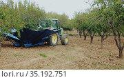 Almond harvesting process. Special shaker machine opening umbrella near tree in almond garden, preparing to harvest ripe nuts. Стоковое видео, видеограф Яков Филимонов / Фотобанк Лори