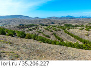 Landscape of loamy relief hills with forest plantations. Стоковое фото, фотограф Владимир Ушаров / Фотобанк Лори