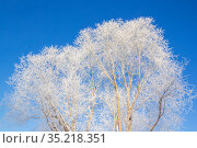 Snow-white tree against sky. Стоковое фото, фотограф Дмитрий Тищенко / Фотобанк Лори
