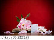 peony pink beautiful flower, book with a greeting card. Стоковое фото, фотограф Peredniankina / Фотобанк Лори