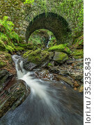 Waterfall cascading over moss covered rocks and under Maria's Bridge. Tollymore Forest Park, County Down, Northern Ireland, UK. August 2020. Стоковое фото, фотограф Robert  Thompson / Nature Picture Library / Фотобанк Лори