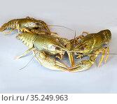 Live crayfish on a gray background. Стоковое фото, фотограф Мила Демидова / Фотобанк Лори