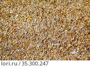 Footstep kho samui bay thailand asia rock stone abstract texture south... Стоковое фото, фотограф Zoonar.com/LKPRO / easy Fotostock / Фотобанк Лори