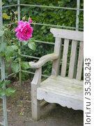 Red rose and garden bench in English garden. Стоковое фото, фотограф Dariusz Gora / easy Fotostock / Фотобанк Лори