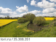 Suffolk spring landscape. Hadleigh, Suffolk, UK. Стоковое фото, фотограф Dariusz Gora / easy Fotostock / Фотобанк Лори