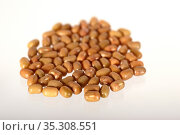Closeup Of Moth Beans, Indian name Matki, Closeup of moth beans a... Стоковое фото, фотограф Dipak Chhagan Shelare / easy Fotostock / Фотобанк Лори
