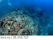 Diver exploring coral reefs, Green Island, Taiwan. Стоковое фото, фотограф Magnus Lundgren / Wild Wonders of China / Nature Picture Library / Фотобанк Лори