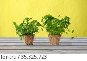 basil and parsley herbs in wicker baskets on table. Стоковое фото, фотограф Syda Productions / Фотобанк Лори