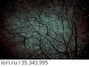 Horror background. Scary frightening tree branches glowing with bloody color in the dark with mystical shadows in the night haze in the green-blue light of the moon. Стоковое фото, фотограф Светлана Евграфова / Фотобанк Лори