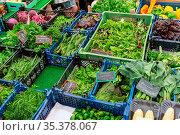 Verschiedene Arten von Kräutern und Salat zum Verkauf auf einem Markt. Стоковое фото, фотограф Zoonar.com/elxeneize / easy Fotostock / Фотобанк Лори