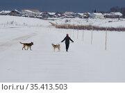 Человек гуляет с собаками по льду реки. Стоковое фото, фотограф Яковлев Сергей / Фотобанк Лори